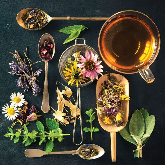 Ghidul ceaiurilor de plante   despre ceai