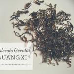 Un ceai alb de excepție: Dulceața Cerului Guangxi