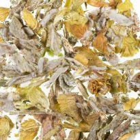 Ceai plante Sideritis